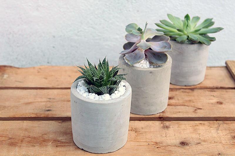 succulent.2_1800x